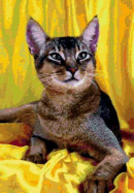 Абиссинская кошка 2