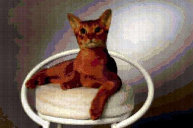 Абиссинская кошка 3