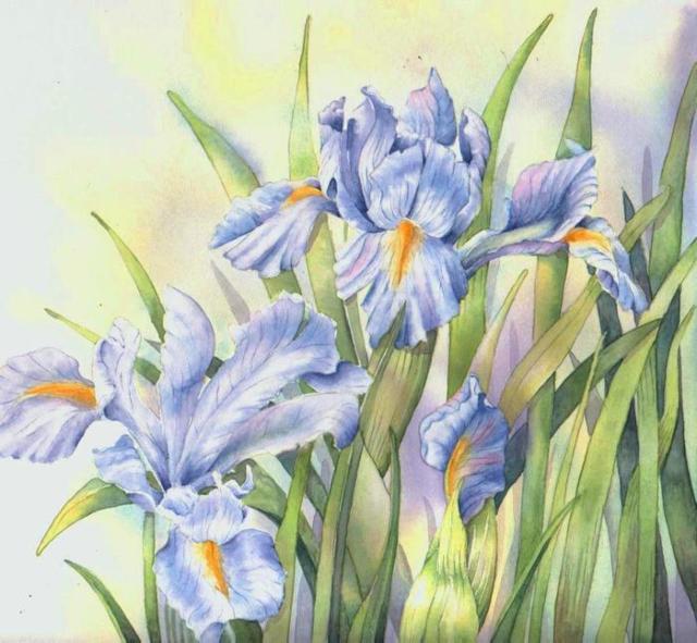 Нежные ирисы, цветы, букет,