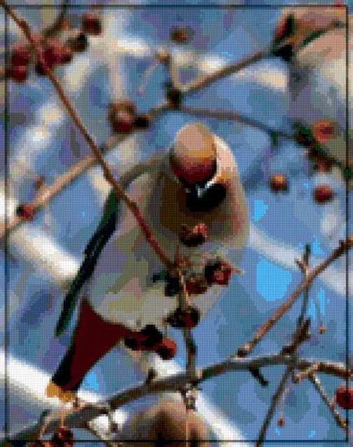 &1405, птица, свиристель