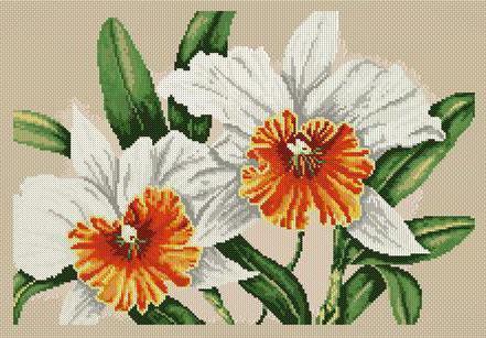 Нарциссы, цветы, нарциссы