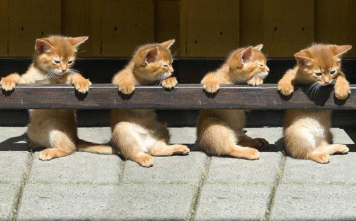 Квартет, котята, котенок