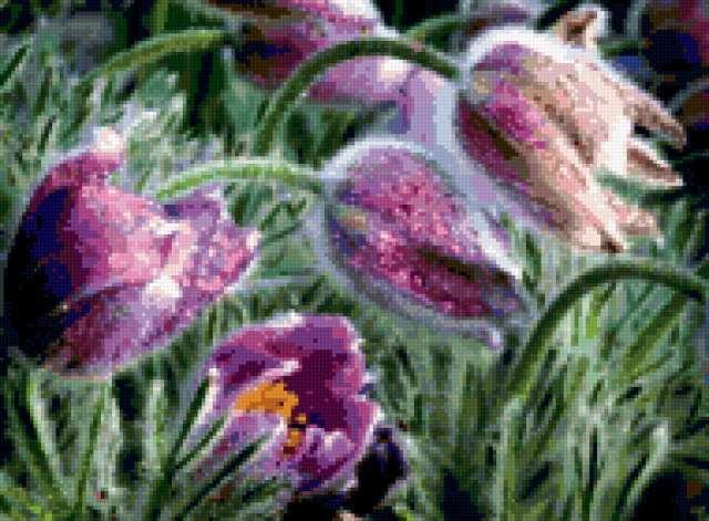 Волшебная сон-трава