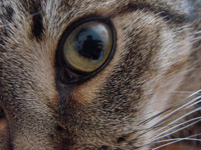 Всевидящее око, глаза, кошки,