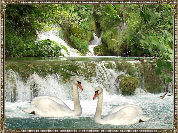 Лебеди у водопада, оригинал