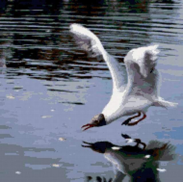 Чайка над водой, предпросмотр