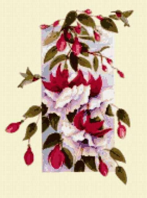 Фуксия, экзотика, цветы