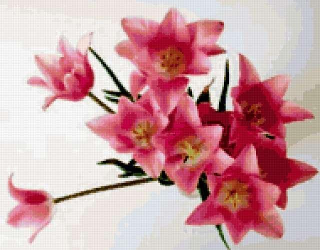 Розовые лилии, цветы, лилии