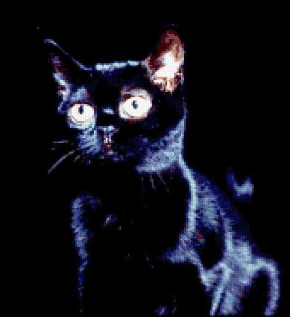 Черный кот на черном фоне,