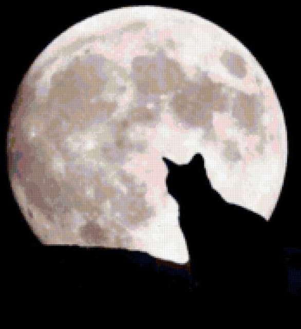 Черный кот, луна, предпросмотр