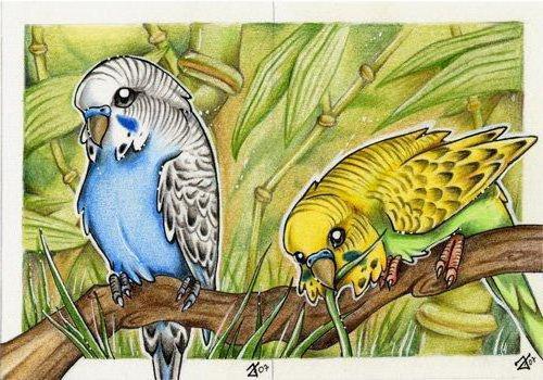 Волнистые попугайчики, попугаи