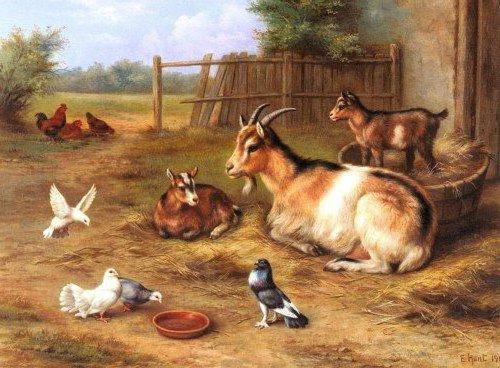 Домашние животные, животные