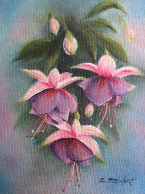 Фуксия, цветок, фуксия