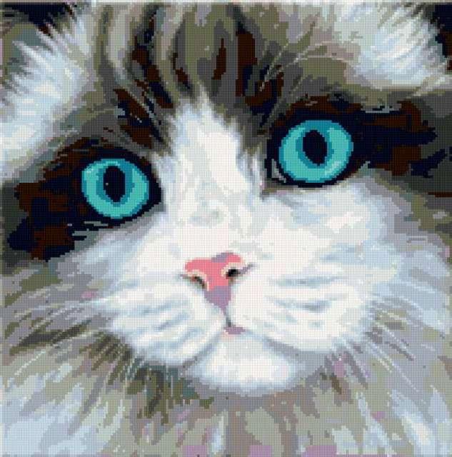 Кошачьи глаза, кошка, кошки,