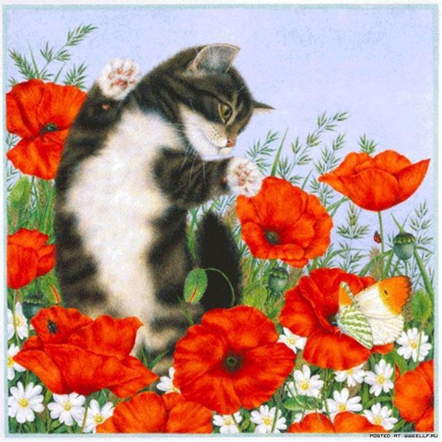 Мои любимые цветы, кошка,