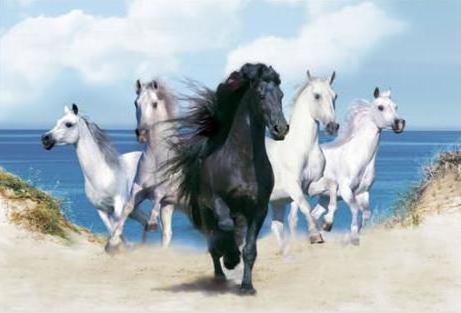 Бег, лошадь, лошади, кони,