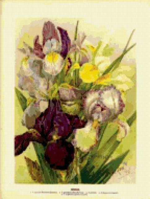 Цветы в гравюрах 19 века..,