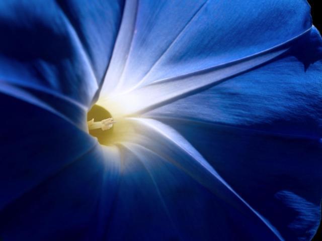 Лунный цветок, оригинал