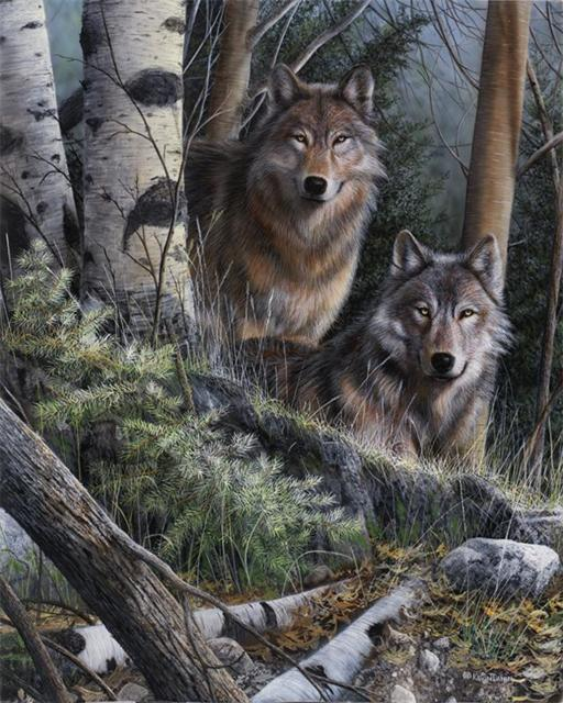 Семья волков, волки, природа,