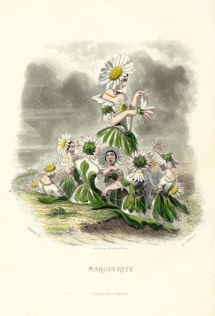 Девушки- цветы маргаритки