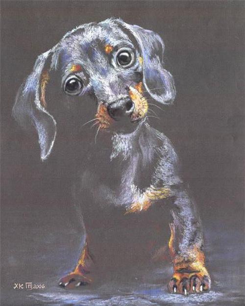 животные, собака, портрет