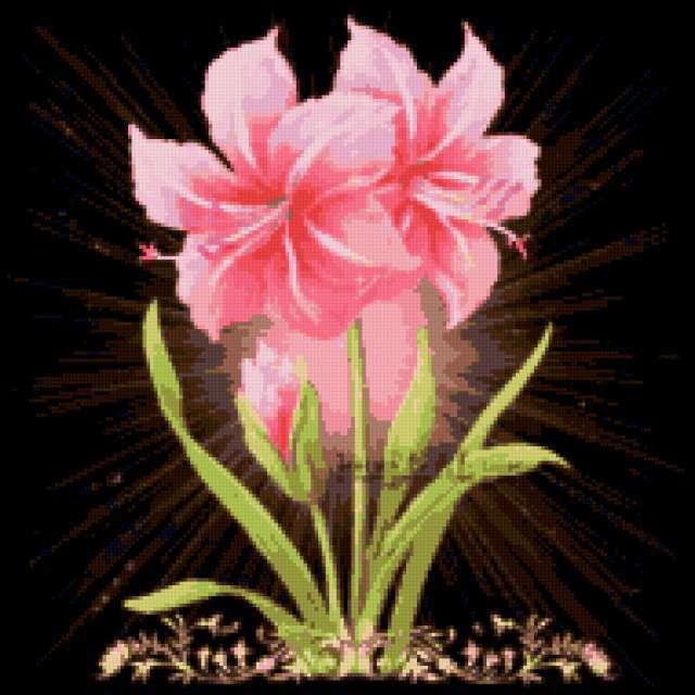 Розовые лилии, предпросмотр