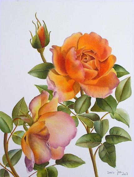 Роза Pat Austin, оригинал