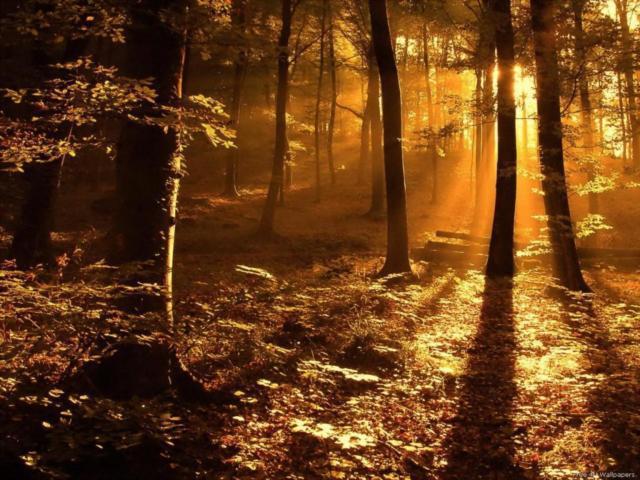 Утро в осеннем лесу, оригинал