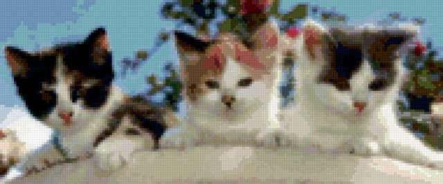 Три котенка, предпросмотр