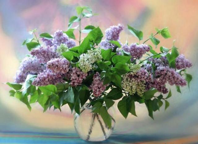 Букет сирени, цветы, букет,