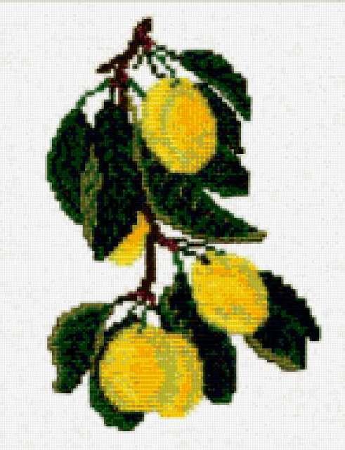 Ветка лимона, предпросмотр