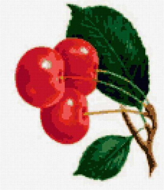 Ветка вишни, фрукты, вишни