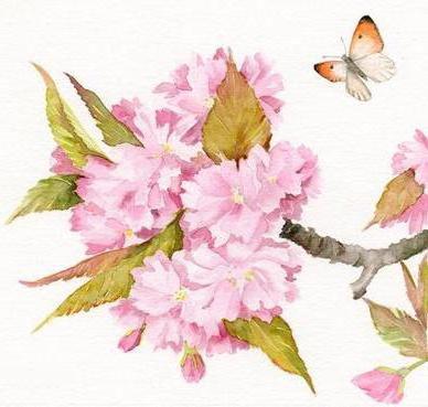 Цветущая вишня, оригинал