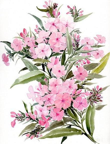 Розовые флоксы, цветочное