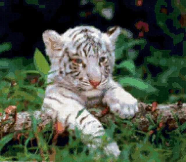 Белый тигренок,