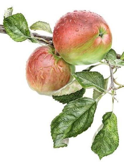 Яблоки на ветке, оригинал