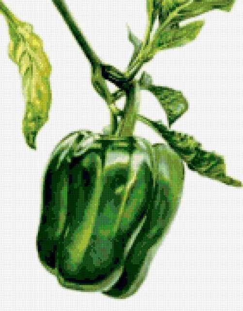 Болгарский перец, предпросмотр