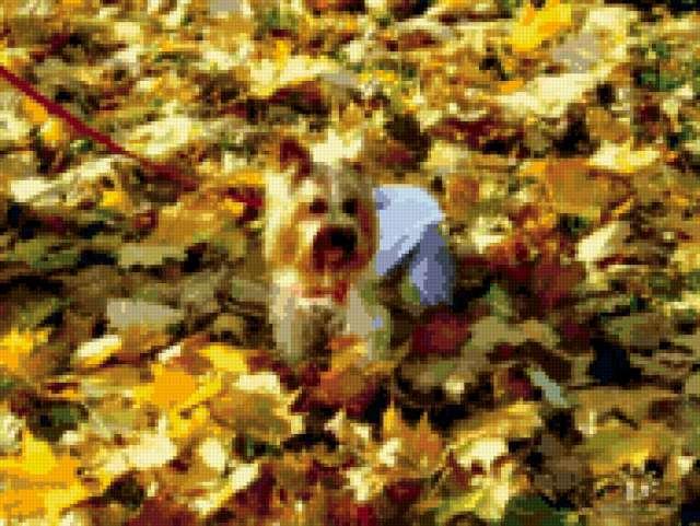 Осенний йорк, предпросмотр