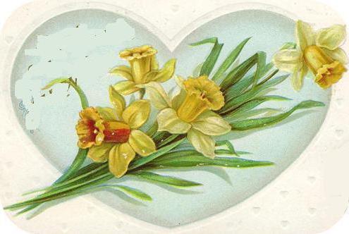 Нарциссы, цветок, нарцисс