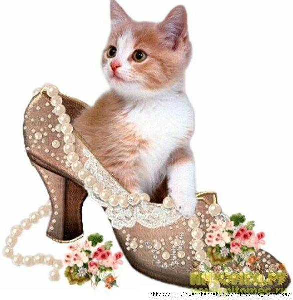 Котёнок в туфельке, оригинал