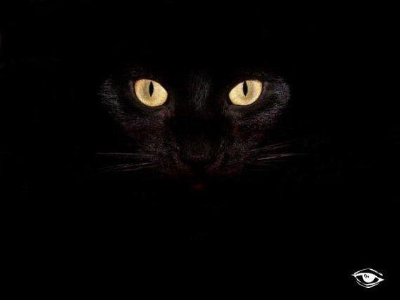 Глаза пантеры, оригинал