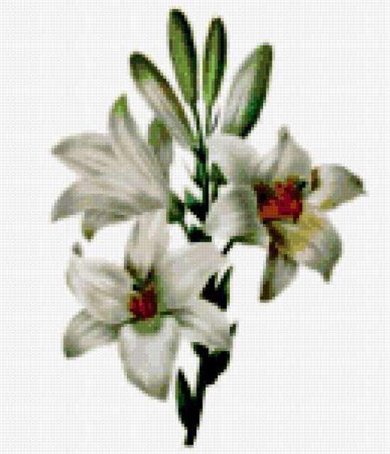 Букет белых лилий, цветы