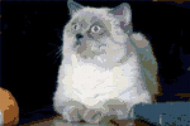 Британский кот, предпросмотр