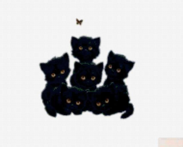 Черные котята, животные