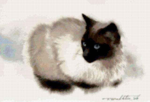 Тайская кошка, предпросмотр