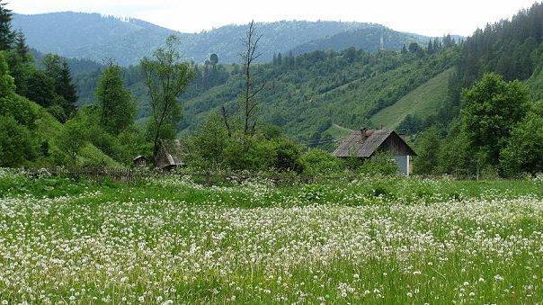 Белая поляна, цветы, горы,
