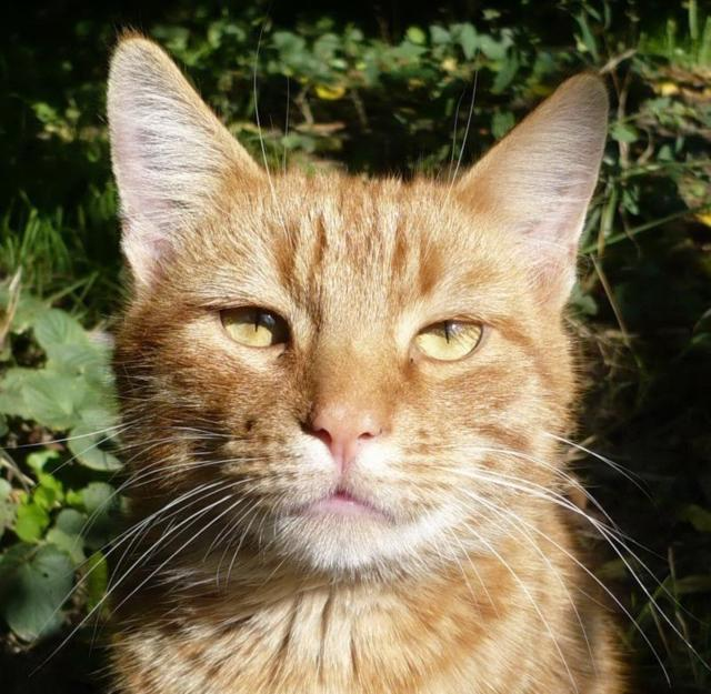 Рыжий кот, животные