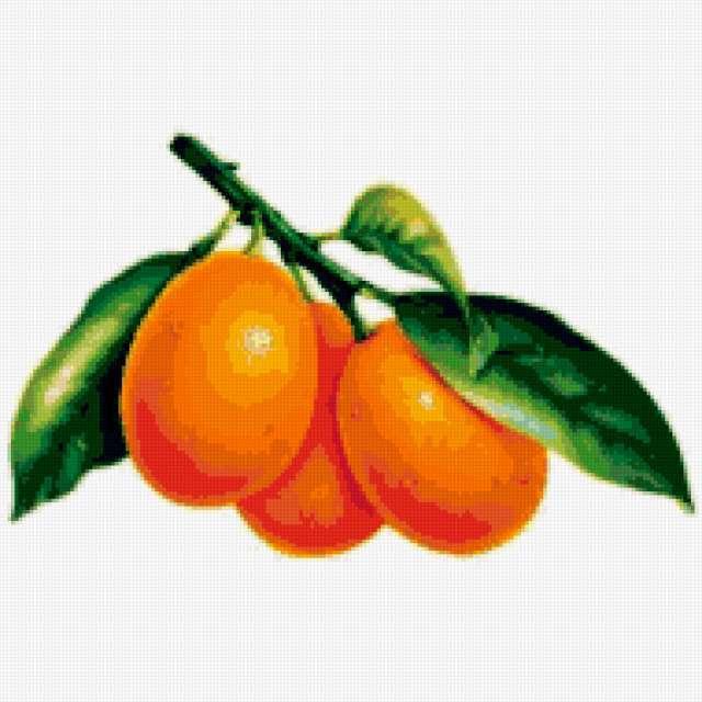 Апельсины на ветке, апельсины,