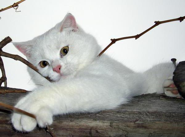 Кот на дереве, оригинал