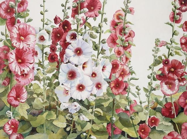 Мальвы, цветочное, садовое